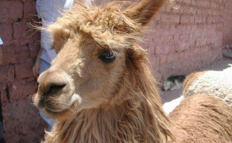 Cusco Main Image